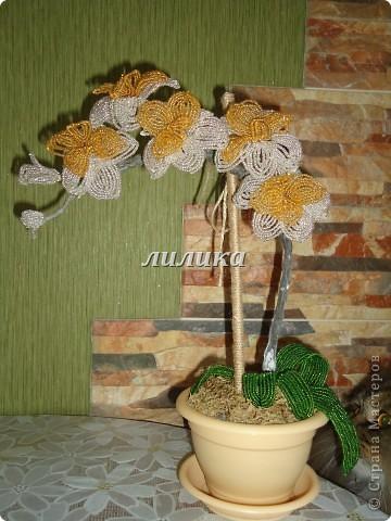 Вот такая орхидея получилась у меня.