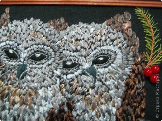 Совушки в гнезде фото 11