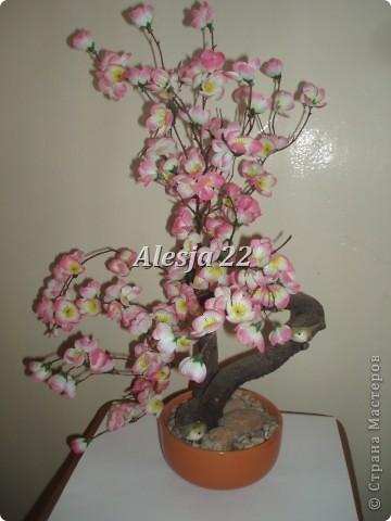 cvetuwaja sakura