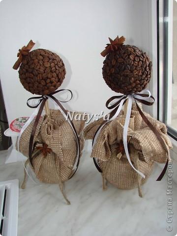 Кофейные деревья в моей роще ))))))))))) фото 1