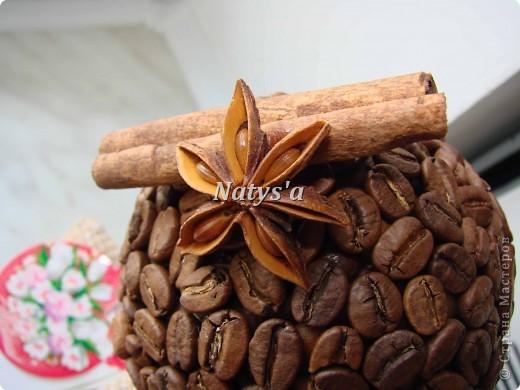 Кофейные деревья в моей роще ))))))))))) фото 2