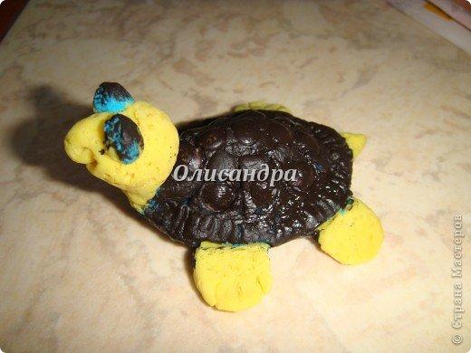 Я коллекционирую черепашек и пытаюсь делать их своими руками из различных материалов...  фото 9