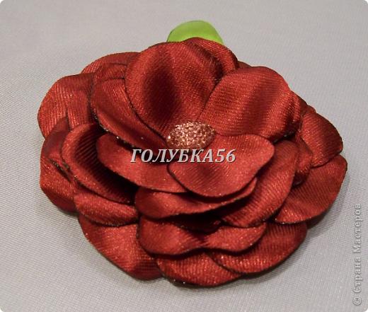 Красная роза фото 1