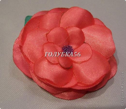 Красная роза фото 3