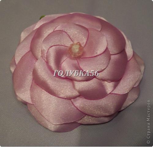 Красная роза фото 4