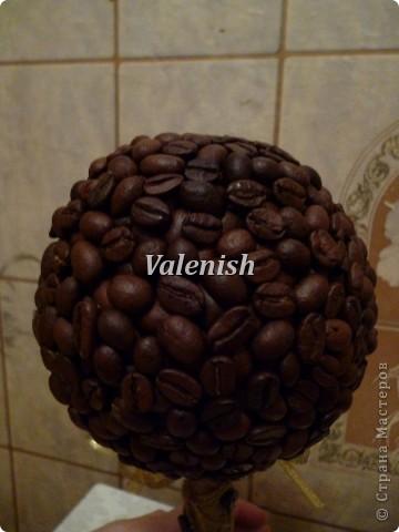 Дебют. Первое мое кофейное дерево фото 4