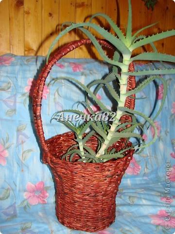 Мои плетеночки. фото 15