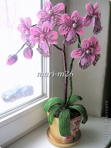 Бисероплетение Орхидея или