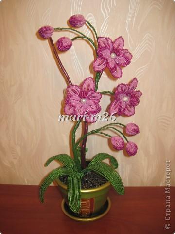 орхидея в подарок Бисер