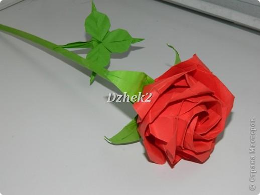 новая роза Кавасаки Бумага