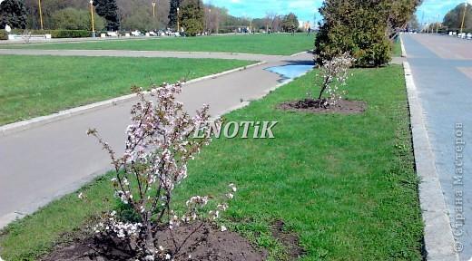 """Во время своего  визита в Москву вице-губернатор Токио Канди Мураяма сделал подарок городу в виде 72 саженцев сакуры.  """"Сакура для японцев имеет большое значение, у нас все ждут ее цветения, так как оно означает приход весны. Сакура - это знак радости"""", - сказал Мураяма. фото 7"""