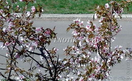 """Во время своего  визита в Москву вице-губернатор Токио Канди Мураяма сделал подарок городу в виде 72 саженцев сакуры.  """"Сакура для японцев имеет большое значение, у нас все ждут ее цветения, так как оно означает приход весны. Сакура - это знак радости"""", - сказал Мураяма. фото 22"""