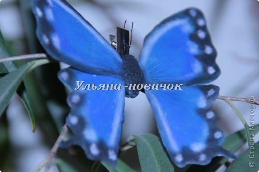 Ну девочки, как и просили, выкладываю МК, как я делаю бабочек))) Я в стране с этой идеей не первенец, первую бабочку я увидела из соленого теста  у Решетниковой Екатерины ( http://stranamasterov.ru/node/168707) (  и чудесную брошку от Марины V (http://stranamasterov.ru/node/351587?c=favorite). Вот, выкладываю вам свою версию))) И так, приступим))) фото 18