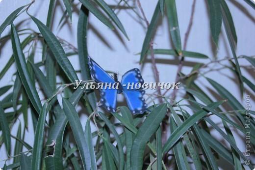 Ну девочки, как и просили, выкладываю МК, как я делаю бабочек))) Я в стране с этой идеей не первенец, первую бабочку я увидела из соленого теста  у Решетниковой Екатерины ( http://stranamasterov.ru/node/168707) (  и чудесную брошку от Марины V (http://stranamasterov.ru/node/351587?c=favorite). Вот, выкладываю вам свою версию))) И так, приступим))) фото 17