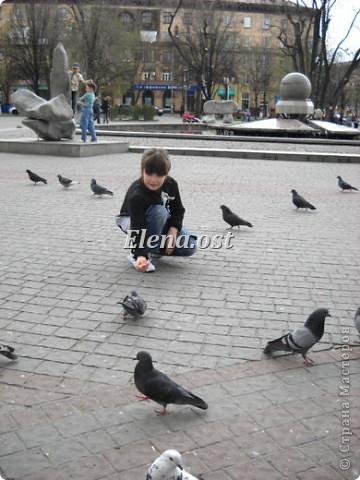 Мы с Вероникой очень любим кормить голубей. Берем с собой горох, семечки, различные крупы и в путь к нашим пернатым питомцам. фото 3