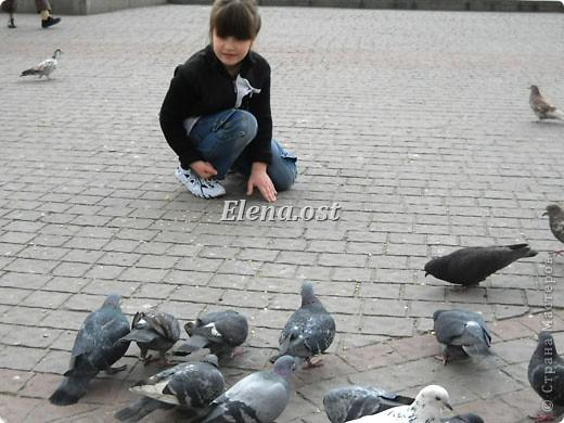 Мы с Вероникой очень любим кормить голубей. Берем с собой горох, семечки, различные крупы и в путь к нашим пернатым питомцам. фото 2