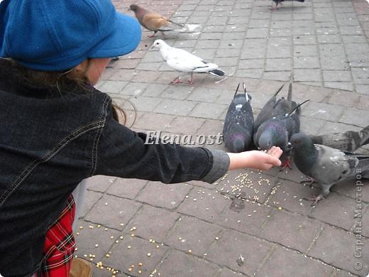Мы с Вероникой очень любим кормить голубей. Берем с собой горох, семечки, различные крупы и в путь к нашим пернатым питомцам. фото 10