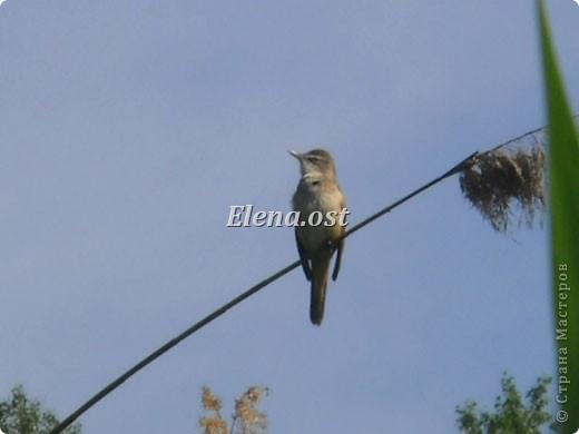 Мы с Вероникой очень любим кормить голубей. Берем с собой горох, семечки, различные крупы и в путь к нашим пернатым питомцам. фото 19