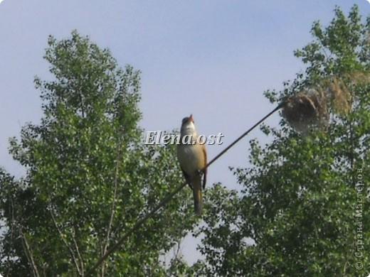 Мы с Вероникой очень любим кормить голубей. Берем с собой горох, семечки, различные крупы и в путь к нашим пернатым питомцам. фото 20