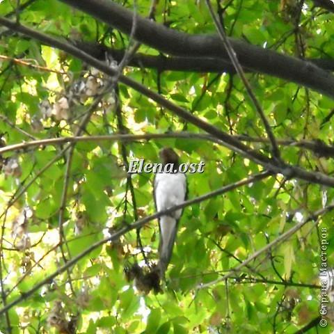 Мы с Вероникой очень любим кормить голубей. Берем с собой горох, семечки, различные крупы и в путь к нашим пернатым питомцам. фото 16