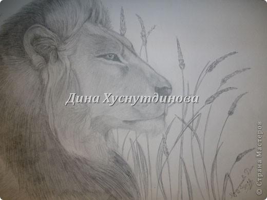 Вот, решила поделиться некоторыми рисунками. Бумага бликует, извиняюсь за качество фото.  Этот лев был подарен МЧ на 23 февраля. Он сам по гороскопу лев и очень любит этих животных) Размер А4. фото 1