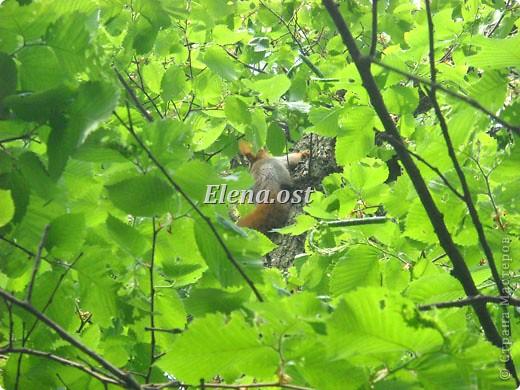 Мы с Вероникой очень любим кормить голубей. Берем с собой горох, семечки, различные крупы и в путь к нашим пернатым питомцам. фото 33