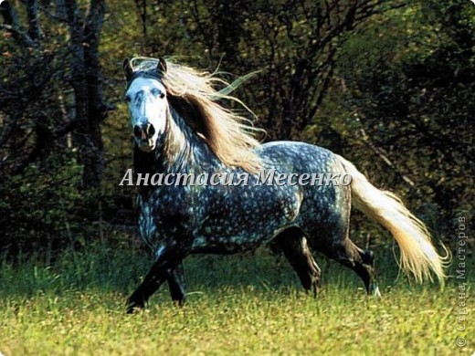Авторская художественная работа в технике сухого валяния, лошадь(4-я работа на заказ) фото 4