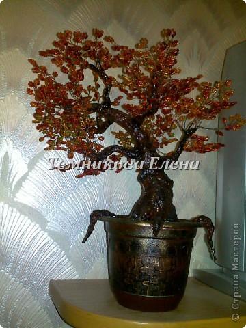 Добрый вечер! Выставляю свои первые и пока единственные бисерные деревья.  фото 3