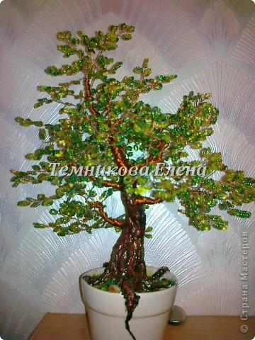 Добрый вечер! Выставляю свои первые и пока единственные бисерные деревья.  фото 1