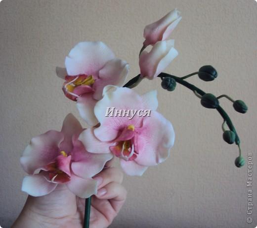 Розы получились не естественно розового цвета. фото 8
