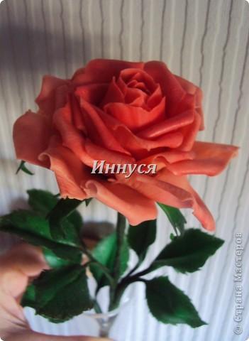 Розы получились не естественно розового цвета. фото 6