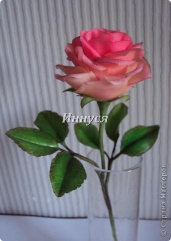 Розы получились не естественно розового цвета. фото 2