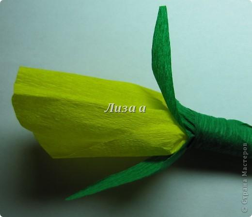 Первый цветок. Качество фото плохое:( фото 1