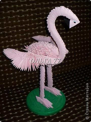 Розовый павлин. фото 8