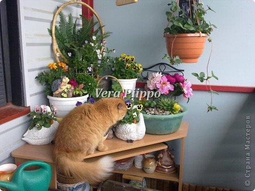 Маленький садик на балконе,для души . фото 5