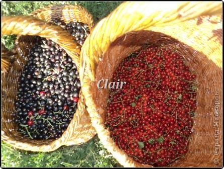 Собираем ягоду в с осени приготовленные корзиночки фото 2