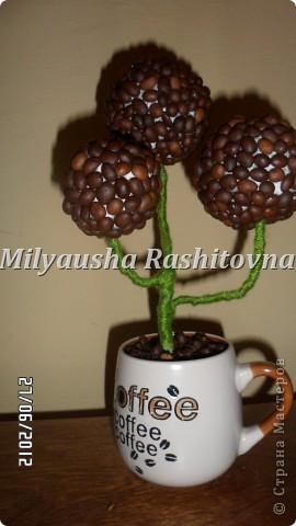 Вдохновившись работами здешних мастериц, решила тоже сотворить кофейное дерево. Получилось как получилось. Есть масса ошибок. Но они мне нравятся.  фото 1