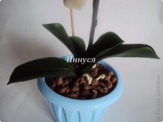 Вот такие орхидейки слепились у  меня на подарок хорошим людям. фото 6