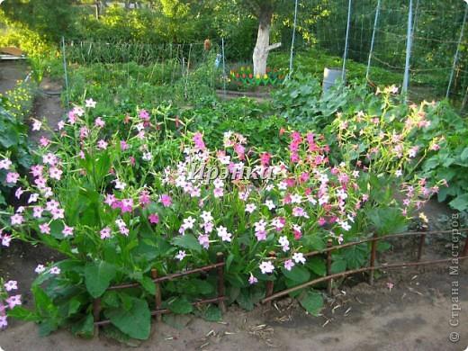 Это наш розарий в мае стояла жарища, что в июне уже роз было - целый миллион! фото 26