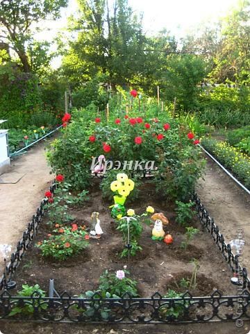 Это наш розарий в мае стояла жарища, что в июне уже роз было - целый миллион! фото 33