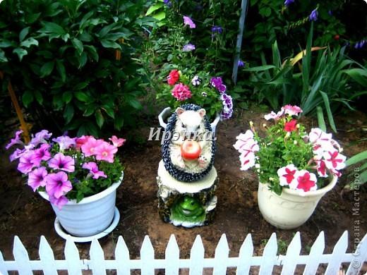 Это наш розарий в мае стояла жарища, что в июне уже роз было - целый миллион! фото 22
