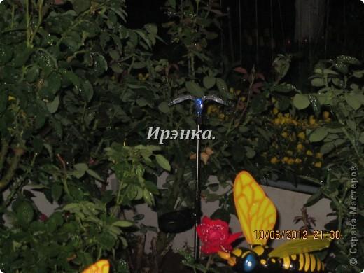 Это наш розарий в мае стояла жарища, что в июне уже роз было - целый миллион! фото 14