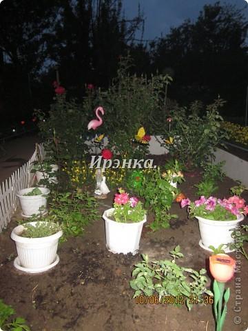 Это наш розарий в мае стояла жарища, что в июне уже роз было - целый миллион! фото 16