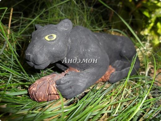 Пантера на травке =) фото 1
