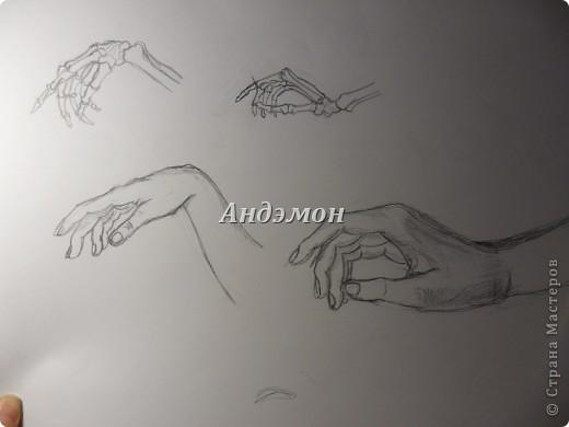 Руки) Кости рисовал с книги, а вот сами руки, с натуры) Просто попросил натурщицу положить их так же как на рисунке) фото 1