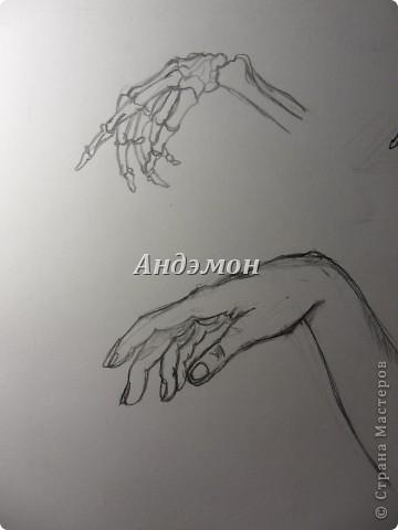 Руки) Кости рисовал с книги, а вот сами руки, с натуры) Просто попросил натурщицу положить их так же как на рисунке) фото 2