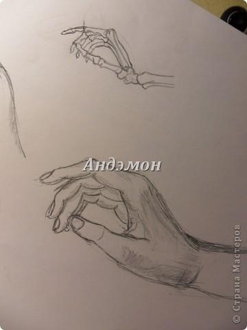 Руки) Кости рисовал с книги, а вот сами руки, с натуры) Просто попросил натурщицу положить их так же как на рисунке) фото 3