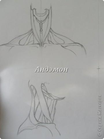Руки) Кости рисовал с книги, а вот сами руки, с натуры) Просто попросил натурщицу положить их так же как на рисунке) фото 6