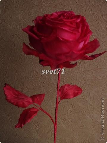Роза.Шелк. фото 4