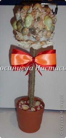 здравствуйте,хочется показать вам мой топиарий из ракушек)надеюсь вам понравится)) фото 1